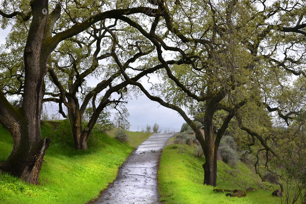 83 - Sycamore Grove Park, Livermore, CA