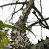 BA trees 3 jpg