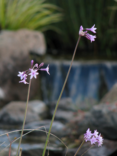 flower and waterfall