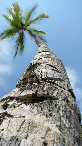tree 7 jpg