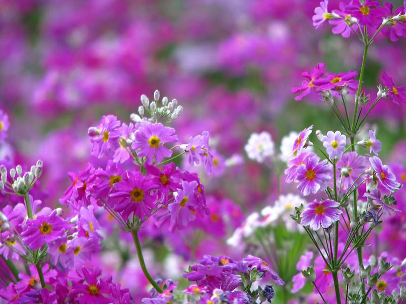 BA garden 2 jpg