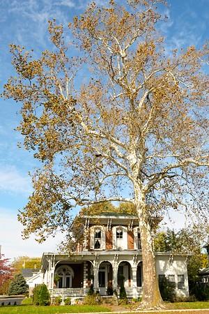 Trees around Wilmington, Ohio