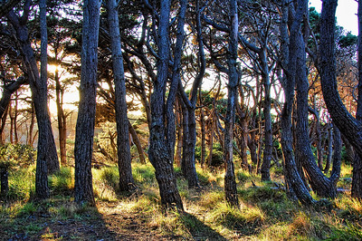 tree-trunk-forest-2