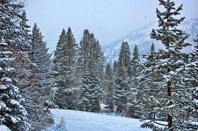 trees-snow-2