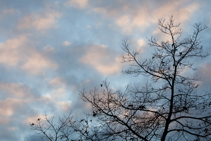 Late Fall in Piedmont Park, Piedmont CA