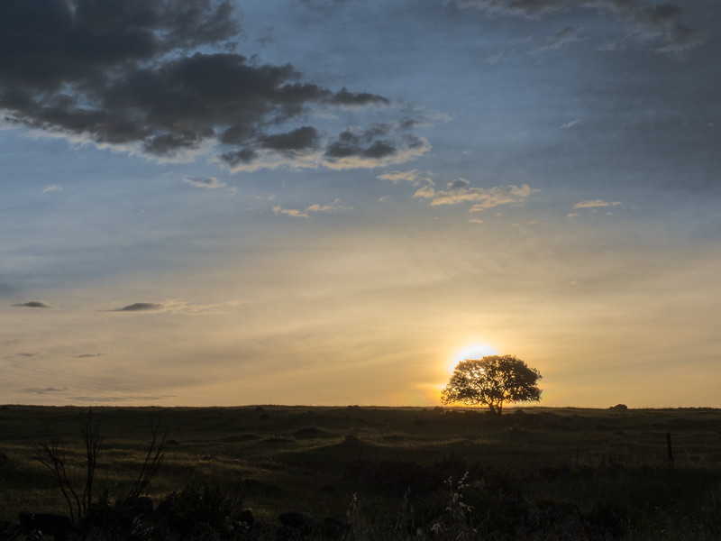 Oak Tree Sihoueete at Sunrise