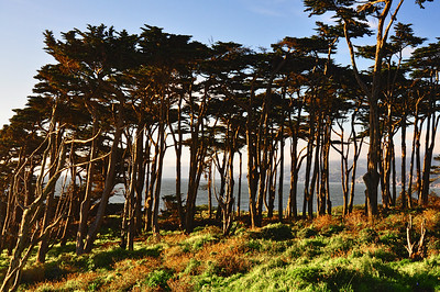 trees-ocean