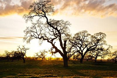 winter-oak-sunset-2
