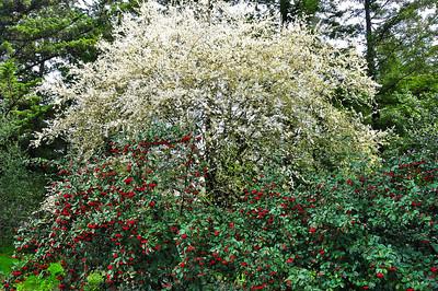 flowering-trees-2