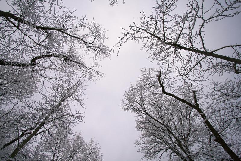 Winter Trees II, Central Park, NY