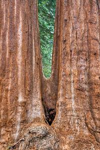 sequoia-trunks