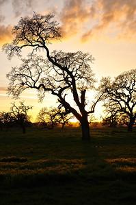 winter-oak-sunset-3