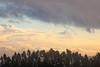 Eucalyptus Grove in Silhouette, Tilden Regional Park, Berkeley CA