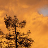 Pine Tree and Orange Sky with a Blue Patch at Sunset