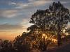 Sun Burst Poking through Eucalyptus Grove, Berkeley CA