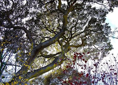 yellow-moss-tree