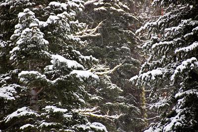 trees-snow
