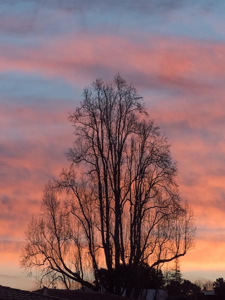 Bare Winter Tree at Sunrise, Oakland CA