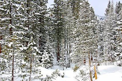 trees-snow-2-2