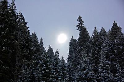 trees-snow-sun