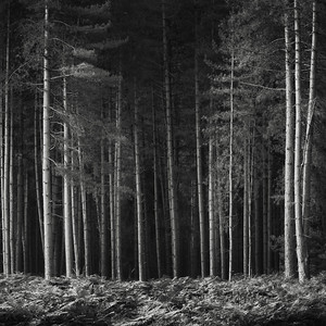 Forest #5