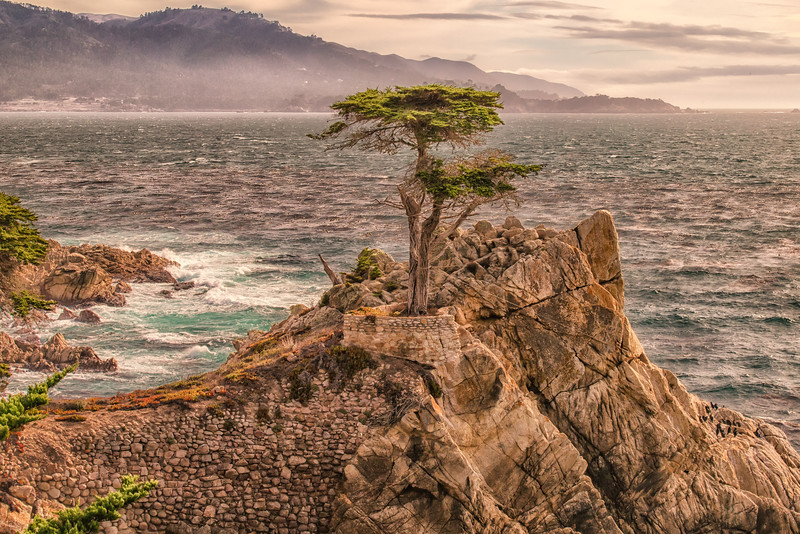 The Lone Cypress, Monterey California