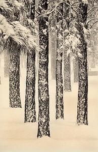 Snowfall, Flagstaff, Arizona