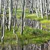 Aspen Reflections II