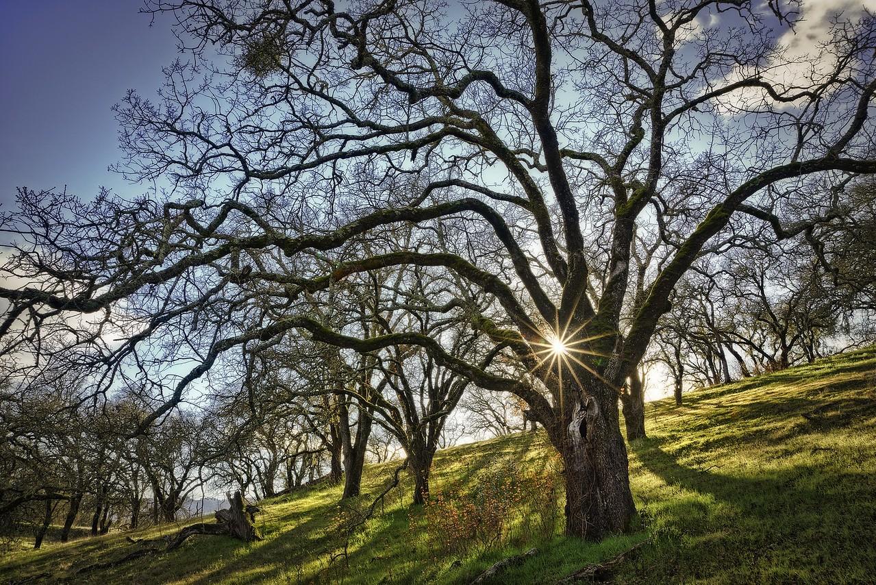Sunburst, Sonoma Valley, California