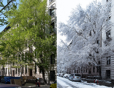 This is our Elm tree in summer and winter, side by side.