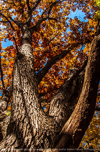 015-tree_autumn-wdsm-02nov13-5602