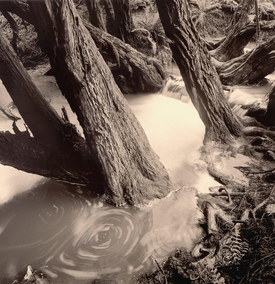 Devon Wood, Sea Ranch, California