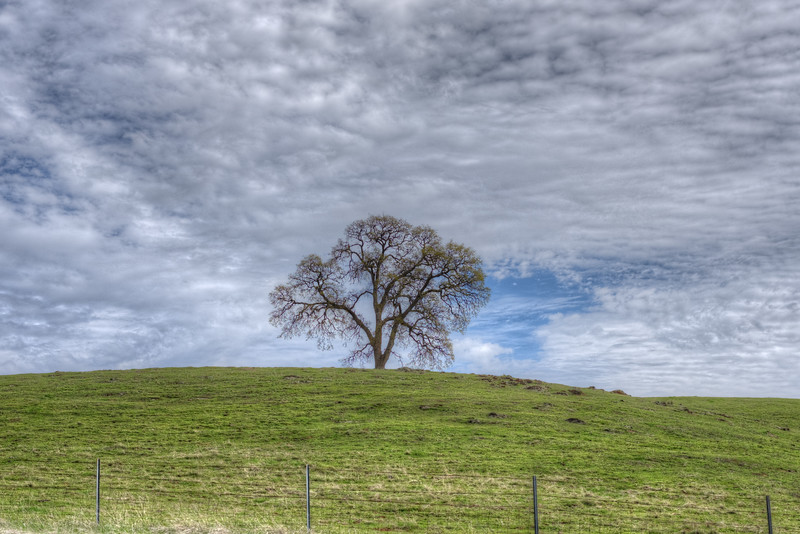 Oak Tree Solitaire