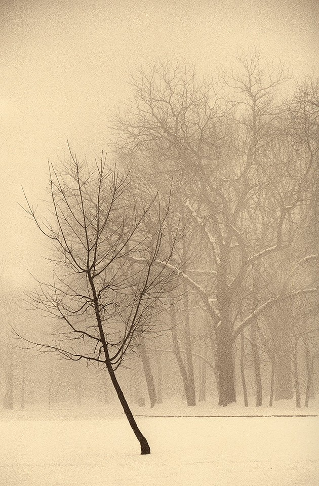 Winter, Palos Park, Illinois