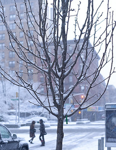 This is a Callery Pear Tree in front of 245W, photographed in mid February. The next picture is the same tree photographed 10 weeks later in late April.