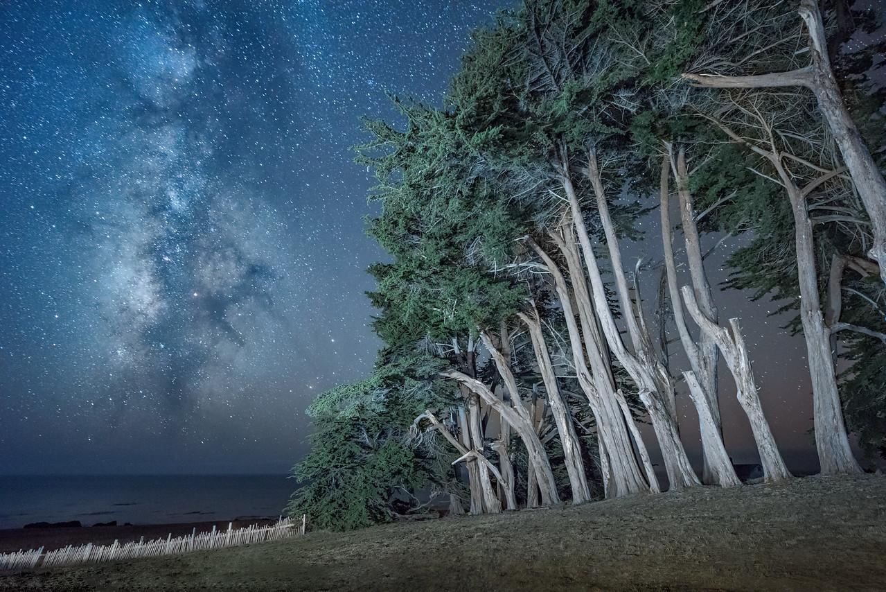 Cypress Hedgerow & Milky Way, Sea Ranch, California