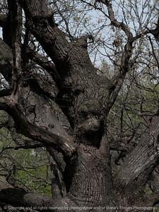 015-tree-wdsm-26apr16-09x12-001-8202