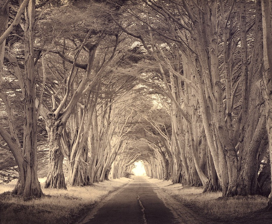 Tunnel of Trees, Point Reyes, California