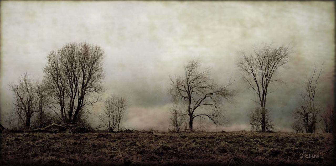 Earlyspringtrees