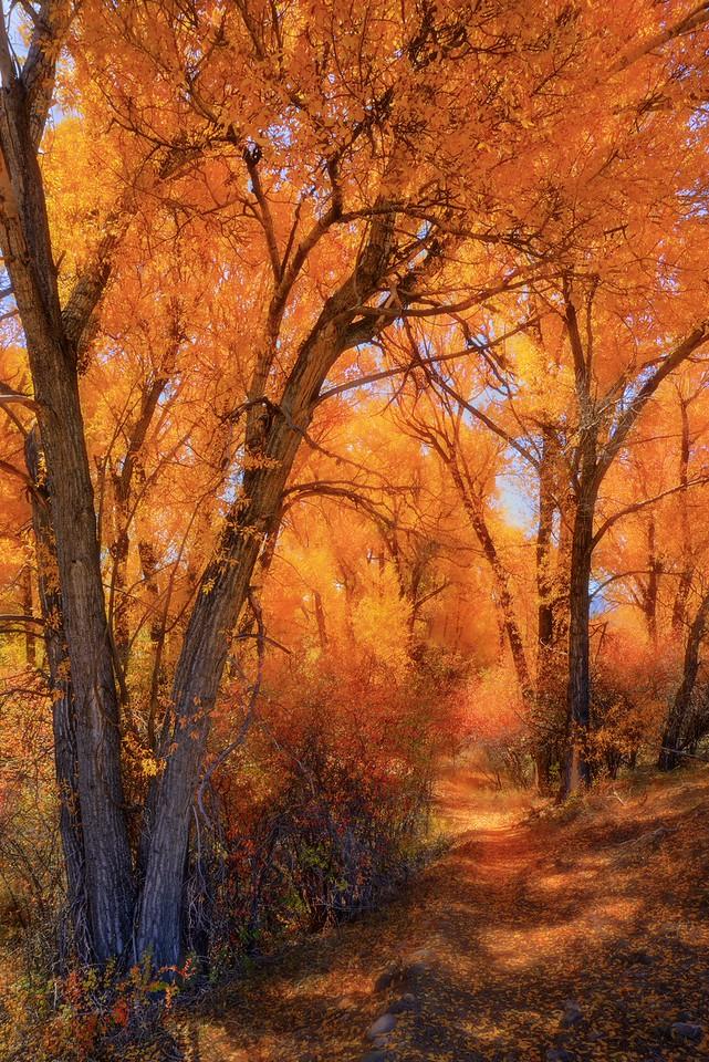 Cotton Wood Trail, Colorado