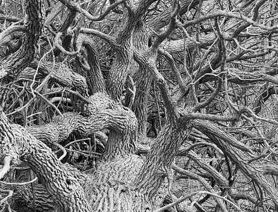 Tangled tree.