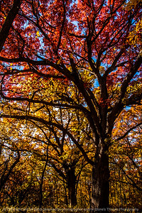 015-trees_autumn-wdm-02nov13-5593