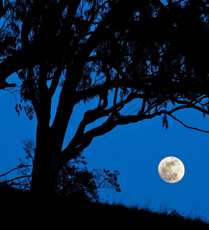Super Moon, Sea Ranch, California
