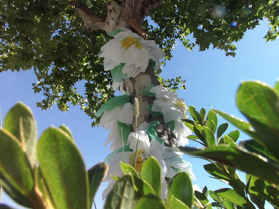 White Droopy Flower Tree