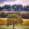 Vineyard Oak Swing