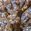 Blossoming Springtime