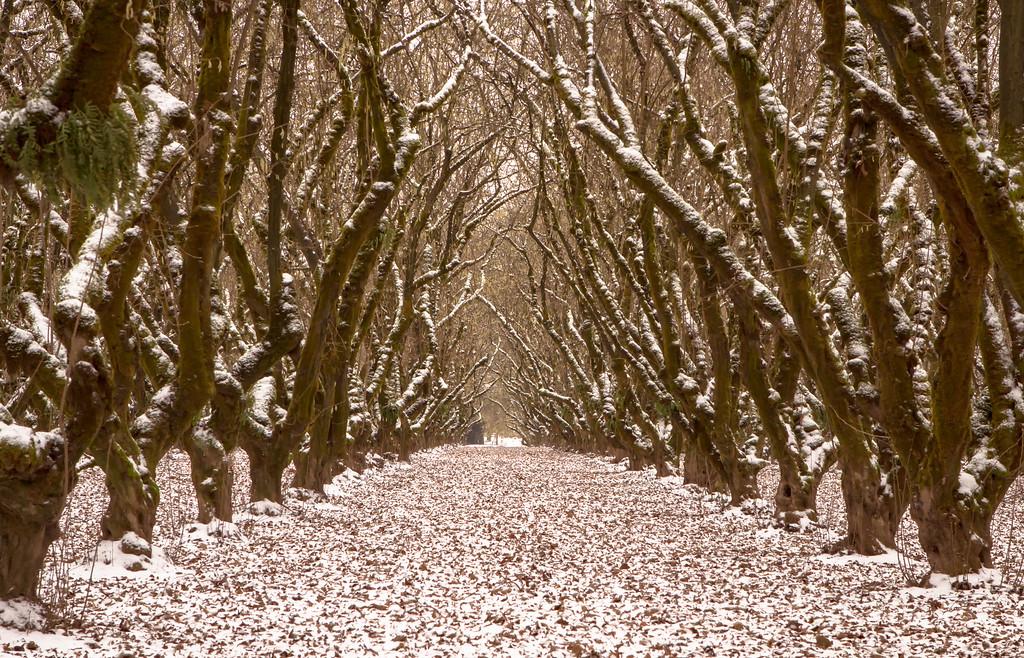 Winter in the grove