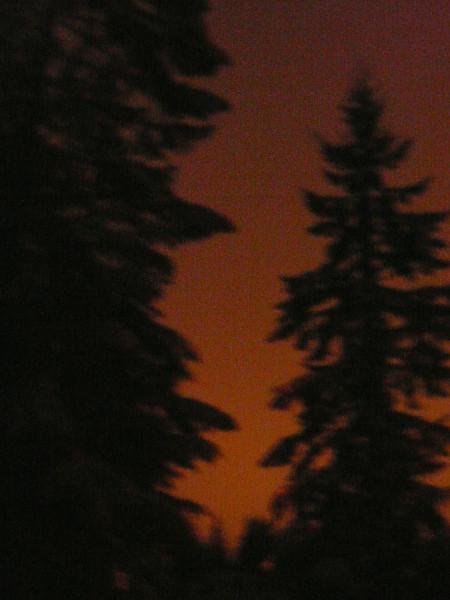 nighttrees