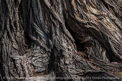 tree_roots-wdsm-27mar15-18x12-003-2273