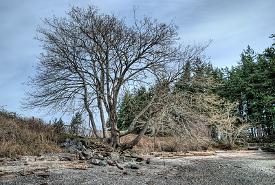 """Tree - Vancouver Island BC Canada Please visit our blog """"Flying Out On A Limb"""" for the story behind the photo."""